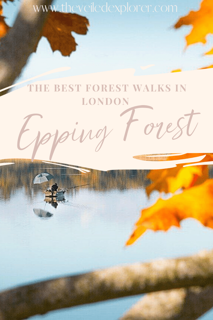 The Best Epping Forest Walks & Hikes Trail Guide